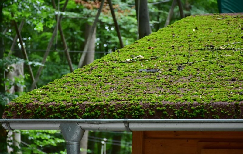 Kill moss on the roof with water guns